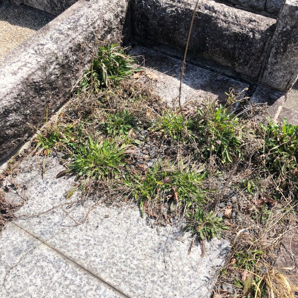 お彼岸,お墓参り代行,名古屋市,ご縁道